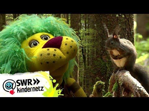 Flinke Eichhornchen Oli S Wilde Welt Swr Kindernetz Youtube