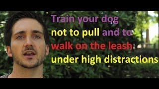 Train Me Please - Episode 8 - Increasing Distractions For Your Dog When He Walks On The Leash