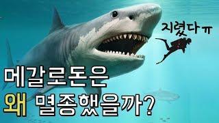 초거대 상어 메갈로돈은 왜 멸종했을까?