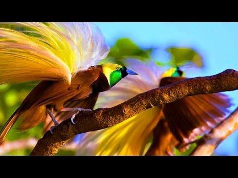 Красивые птицы планеты
