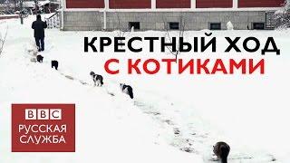 В Оптиной пустыни прошел кошачий Крестный ход(В интернете появилось видео