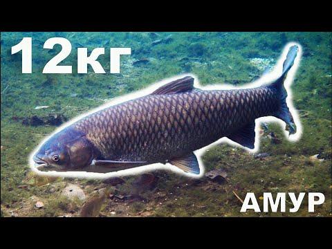 Рибалка Бурштин Амури
