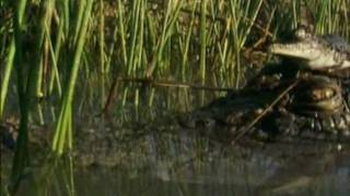 Крокодил. Музыкальный видео-клип. Наше всё!
