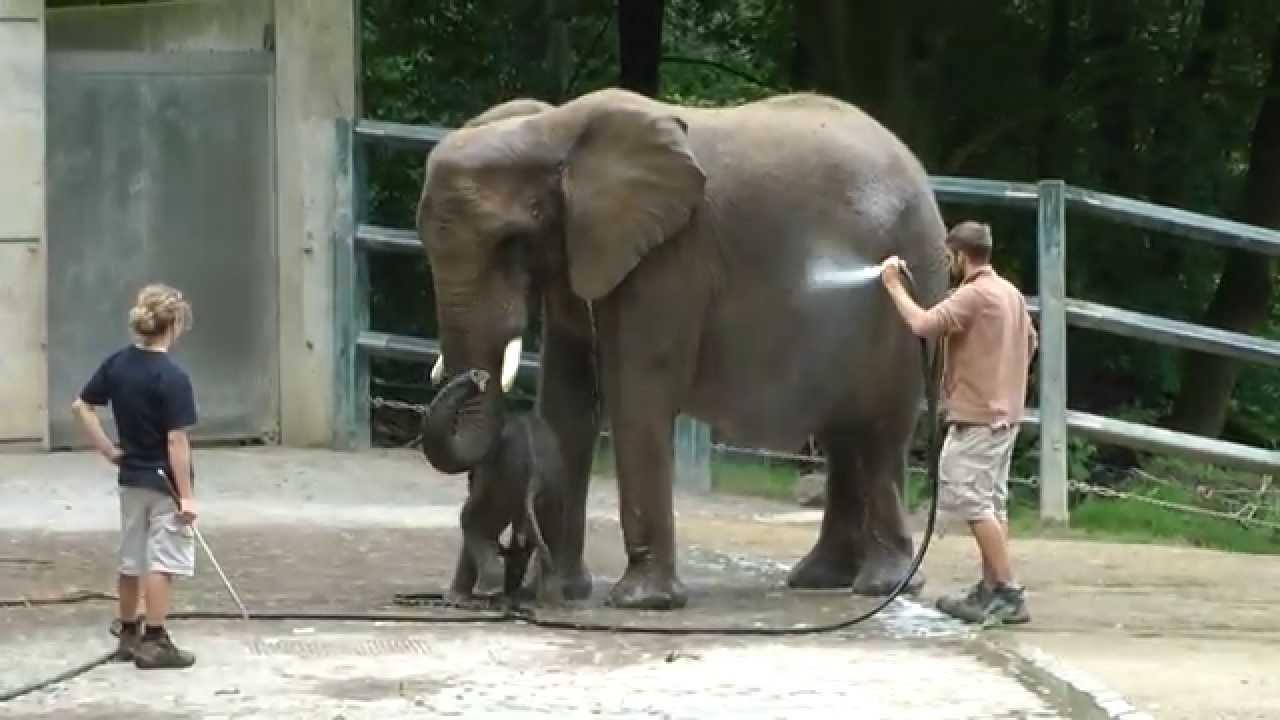 Wuppertal zoo elefant schwebebahn webcam