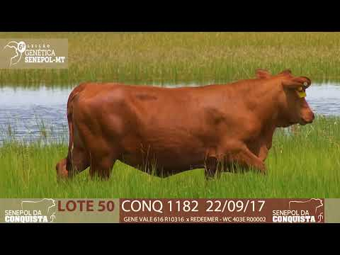 LOTE 50 CONQ 1182