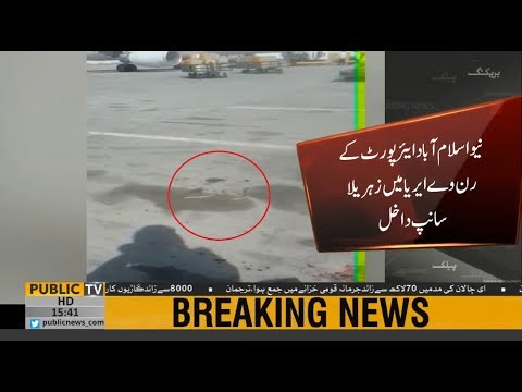 Venomous snake seen on the runway of New Islamabad Airport  | Public News