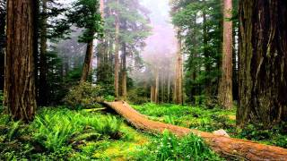 Indian Songs: Nature Dreams - Qarwa Yaku