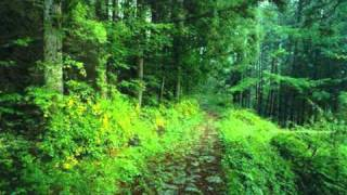Andreas Vollenweider - Steam Forest