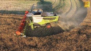 Raps dreschen im Abendlicht - Mähdrescher Claas 770 - Trecker John Deere -  big combine harvester