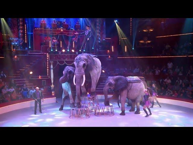 Animaux de cirque : la vie d'après (France 24)