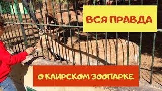 Каирскии зоопарк Вся правда о зоопарке Гизы Египет зимои 2020
