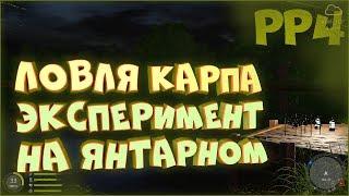 Карп на озере Янтарное Эксперимент с точками Русская рыбалка 4 Сборка на карпа
