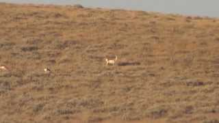 2015 Wyoming Long Range Antelope Hunt