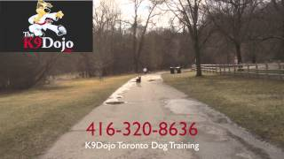 K9dojo: Advanced Hand Signals: German Shepherd