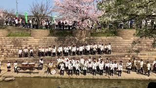 佐保川わいわい桜祭り 三笠中学吹奏楽部