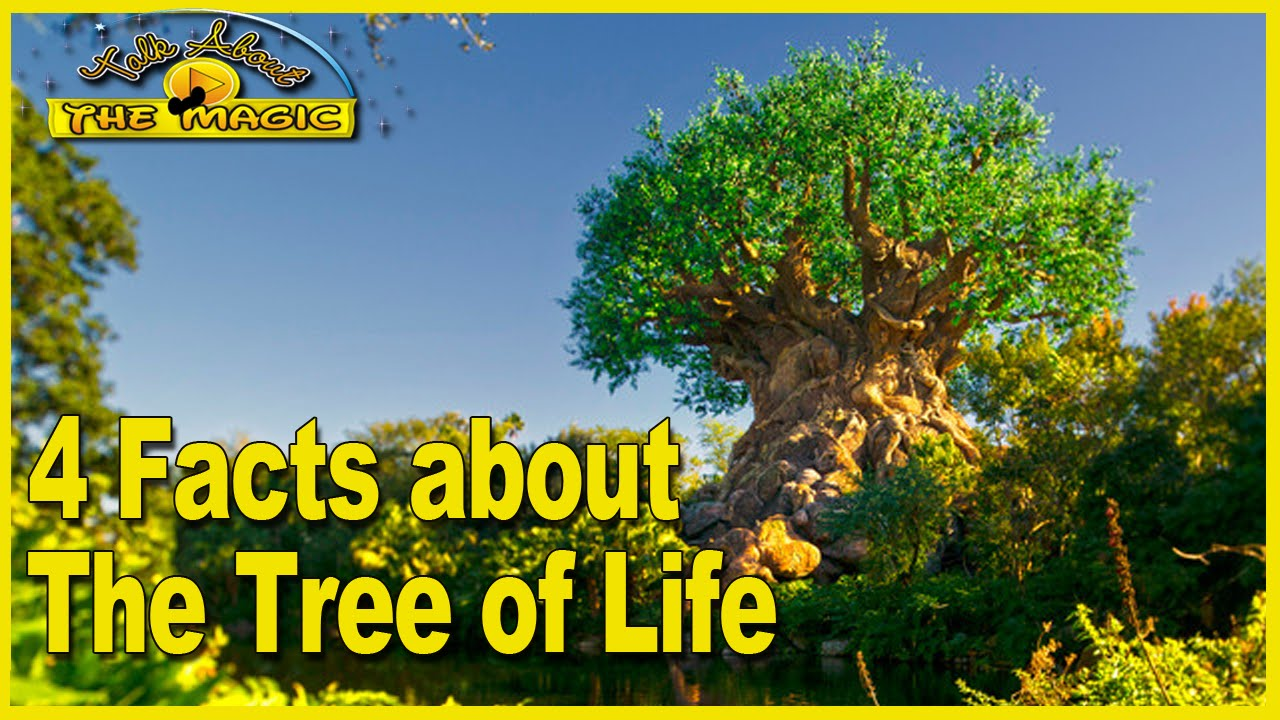 Life Of The Tree
