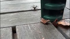 Iso hämähäkki @ Etelä-Suomi 9/2014