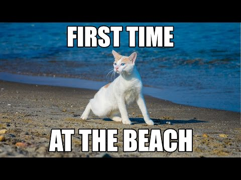 Chapy cat's First Time at the Beach