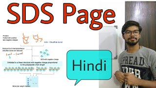 SDS PAGE gel electrophoresis in Hindi