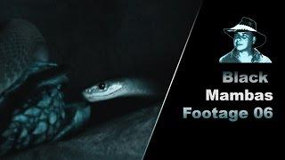 Black Mamba & Tortois Stock Footage 01