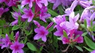 """J. STRAUSS - """"Fruhlinsstimmen (Voices of Spring), Op.410 - Fruhlingsstimmen"""""""