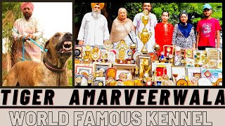 TIGER AMRVEER WALA BULLY DOG BULLY KUTTA