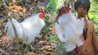 Find n Cook Black Chicken Recipe for Dinner in Forest