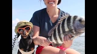 Crusoe The Dachshund's 60 Seconds of FISHIN'