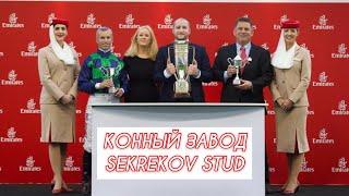 Фильм о конном заводе Sekrekov_Stud. Кабардино-Балкария