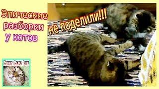 Приколы с котами. Коты дерутся. Кошка нападает на кота. Домашние разборки.