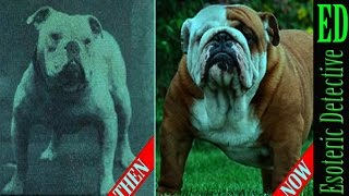 100 years of dog breeding is killing dogs and making mutants, scientists say