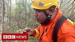 Brazils Amazon Fireman saving whats not burnt - BBC News