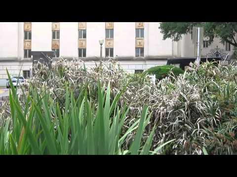 turtles in Tower garden memorial in UT campus - Austin