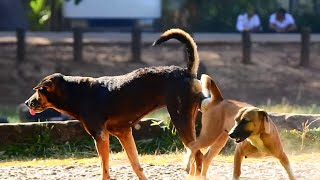 How to dogs make baby On The Street so Sweet  Big dog's Sweet Emotions Rural Dogs 2020