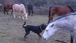 Ulysse et les chevaux
