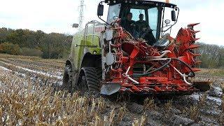 Claas Jaguar 950 w/ Tracks Going For a Swim in The Muddy Fields | Maize / Corn Chopping | Häckseln