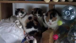 Четыре трехцветных кошки греются рядом.