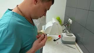 Стоматологи реставрируют клык моржа