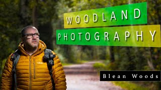Woodland Photography - Blean Woods