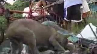 Repeat youtube video Fwdder com   ดูแล้วเศร้าปนหดหู่ นี่แหละหนาชีวิตคนที่เลือกกเกิดไม่ได้   โพสโดย ป่าเขา