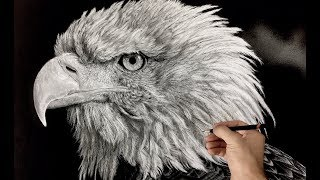 Hyperrealistic Bald Eagle Drawing / Time-lapse