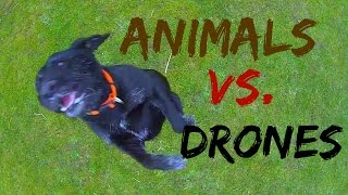 Drone Videos – Animal vs  Drones Compilation(