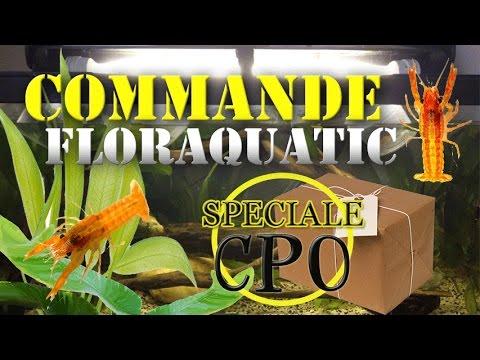 CAMBARELLUS PATZUARENSIS CPO: FLORAQUATIC Unboxing # 2 !
