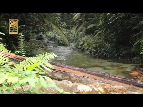 """Simfoni Alam """"Hutan Simpan Ayer Hitam"""""""