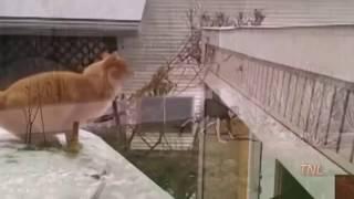 СВЕЖАЯ ПОДБОРКА СУПЕР ПРИКОЛОВ НОЯБРЬ ОТ БЕЗУМНОГО МАКСА funny videos