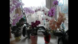 видео Какие комнатные цветы нельзя держать дома незамужней девушке по приметам и почему?
