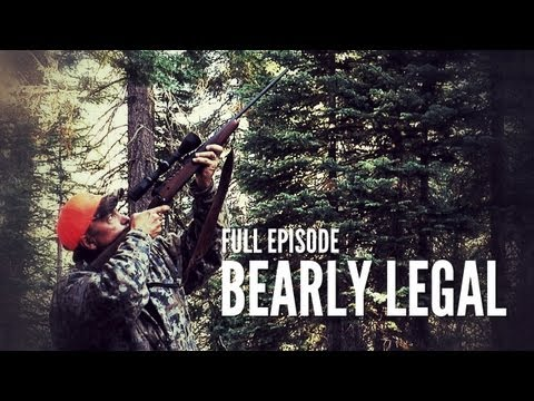 California Bear Hunt with Hounds | Bearly Legal