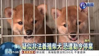 新竹動保所在周一接獲動保團體檢舉,在香山區查獲一間非法養殖場,裡面...