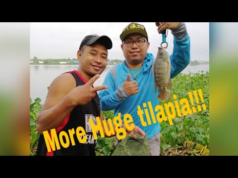 Wow! More Huge Tilapia Fish Caught On C6 Road Laguna Lake / Fishing In Philippines