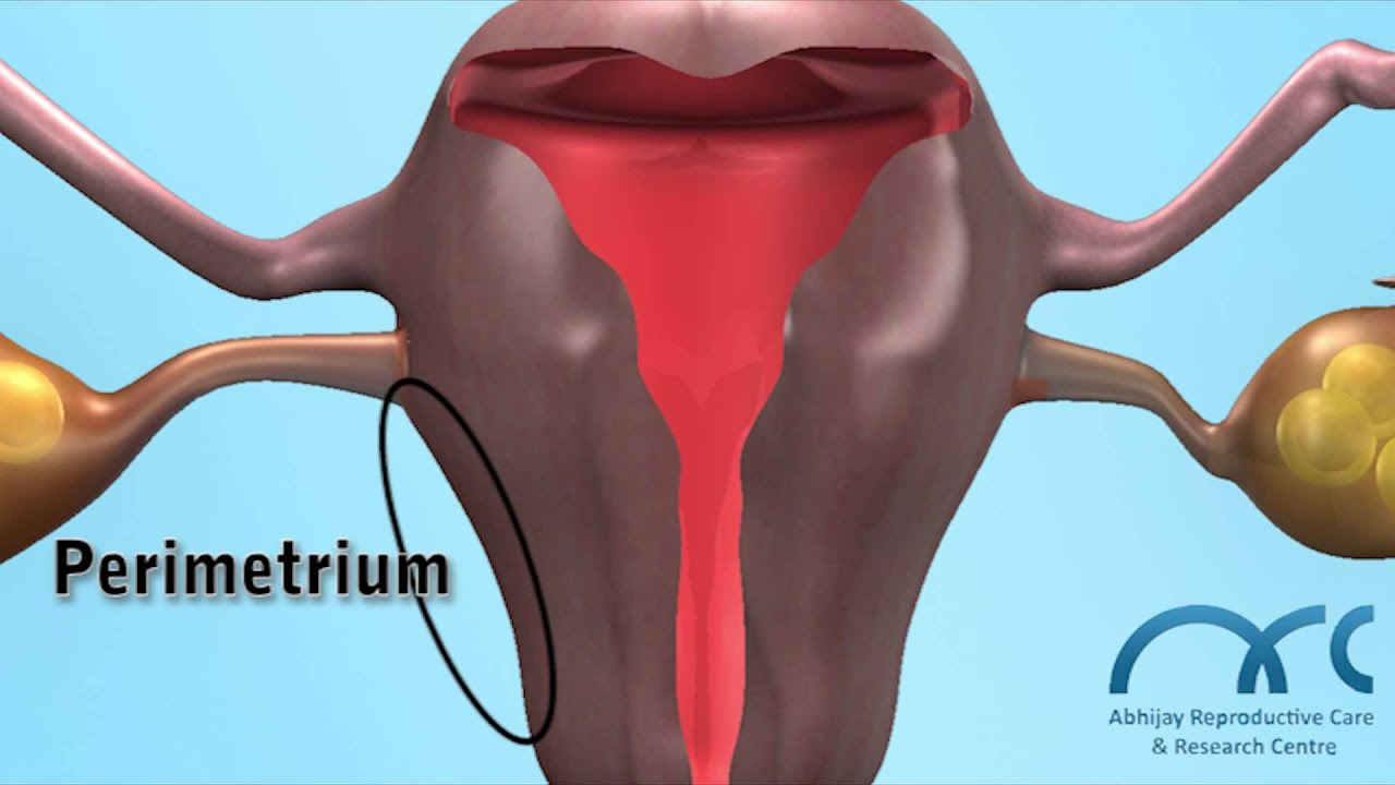 Female Reproductive System 3d Natural Fertility Remedies To